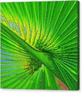 Palm Frond Work A Canvas Print