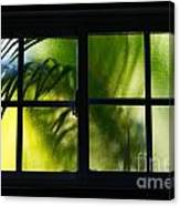 Palm In A Window Canvas Print