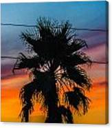 Palm In The Sunset Canvas Print