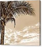 Palm Canvas Print