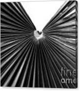 Palm Leaf 6684bw Canvas Print