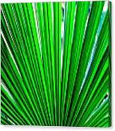 Palm Leaf 6687 Canvas Print