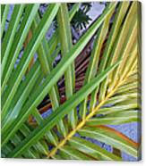 Palm Leaf Abstract Canvas Print