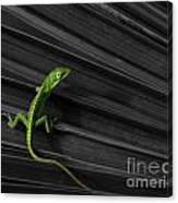 Palm Leaf Lizard Canvas Print