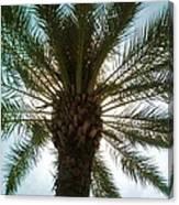 Palm Light Canvas Print