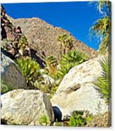 Palm Oasis On Borrego Palm Canyon Trail In Anza-borrego Desert Sp-ca Canvas Print