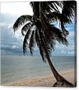 Palm On The Beach Canvas Print