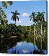 Palm Reflection And Shadow Canvas Print