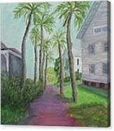 Palm Row In St. Augustine Florida Canvas Print