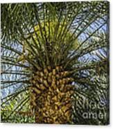 Palm Sky Canvas Print