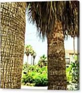 Palm Tree 7 Canvas Print