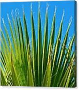 Palm Tree And Blue Sky 2/06 Canvas Print