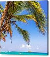 Palm Tree And Caribbean Canvas Print