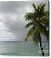 Palm Tree And Ocean Canvas Print