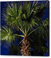 Palm Tree At Night Canvas Print