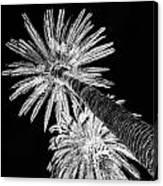 Palm Tree Black Canvas Print