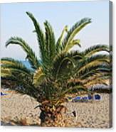 Palm Tree By The Beach Canvas Print