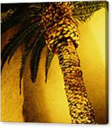 Palm Tree In Vegas. Canvas Print