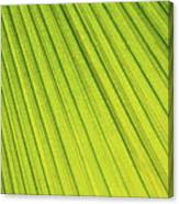 Palm Tree Leaf Abstract Canvas Print