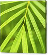 Palm Tree Leaf Canvas Print