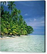 Palm Tree Lined Beach Papua New Guinea Canvas Print