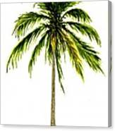 Palm Tree Number 2 Canvas Print