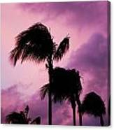 Palm Tree Silhouettes At Dusk In Aruba Canvas Print