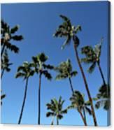 Palm Trees Against A Clear Blue Sky Canvas Print