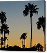 Palm Trees At Sunset Canvas Print