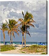 Palm Trees At The Beach Canvas Print
