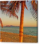 Palm Trees By A Restaurant On The Beach In Bahia Kino-sonora-mexico Canvas Print