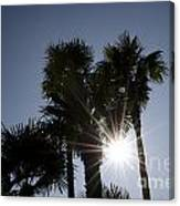 Palm Trees In Backlit Canvas Print