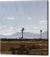 Palm Trees In Elche Canvas Print