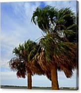Palm Trees In The Wind Canvas Print