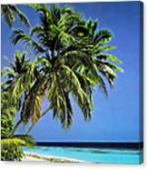 Palm Trees On Little Palm Island Filtered Canvas Print