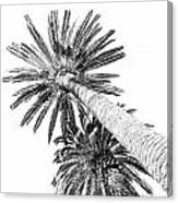 Palm Tree White Canvas Print