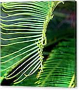 Palme Cycas Canvas Print