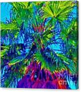 Palmetto Number 3 Canvas Print