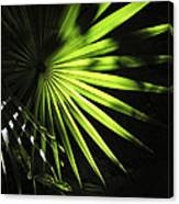 Palmetto And Rays Canvas Print