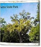 Palmetto State Park Canvas Print