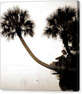 Palmettos Near St Canvas Print