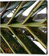 Palms E  Canvas Print