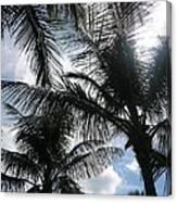 Palms In Stuart Canvas Print