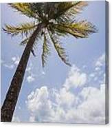 Palms Trees Along Luquillo Beach In Puerto Rico Canvas Print