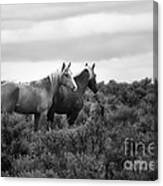 Palomino - Buttes - Wild Horses - Bw Canvas Print