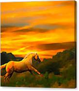 Palomino Pal At Sundown Canvas Print