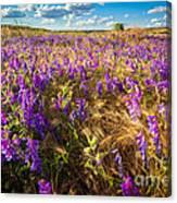 Palouse Falls Wildflowers Canvas Print