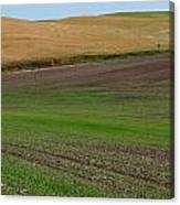 Palouse Patchwork 3 Canvas Print