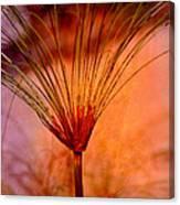 Pampas Grass - II Canvas Print