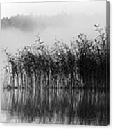 Pampas Grass In Fog Canvas Print
